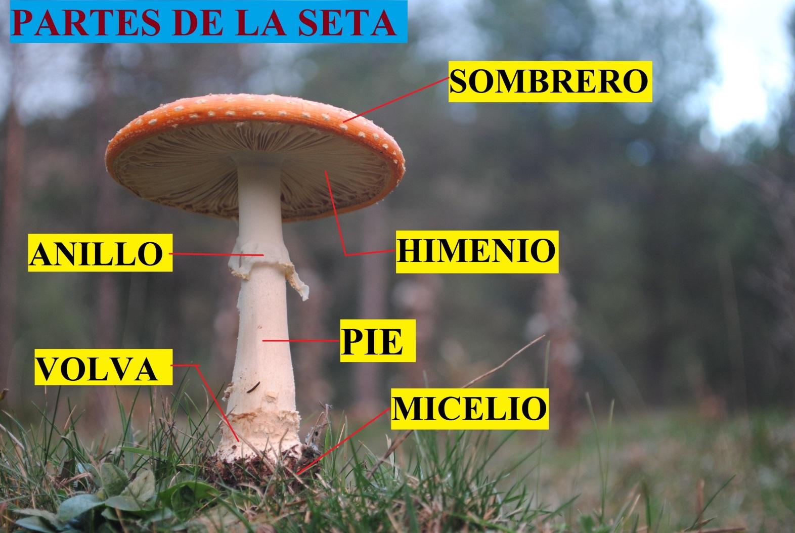 C:\Users\Luis\Desktop\carteles museo\LASETA.jpg