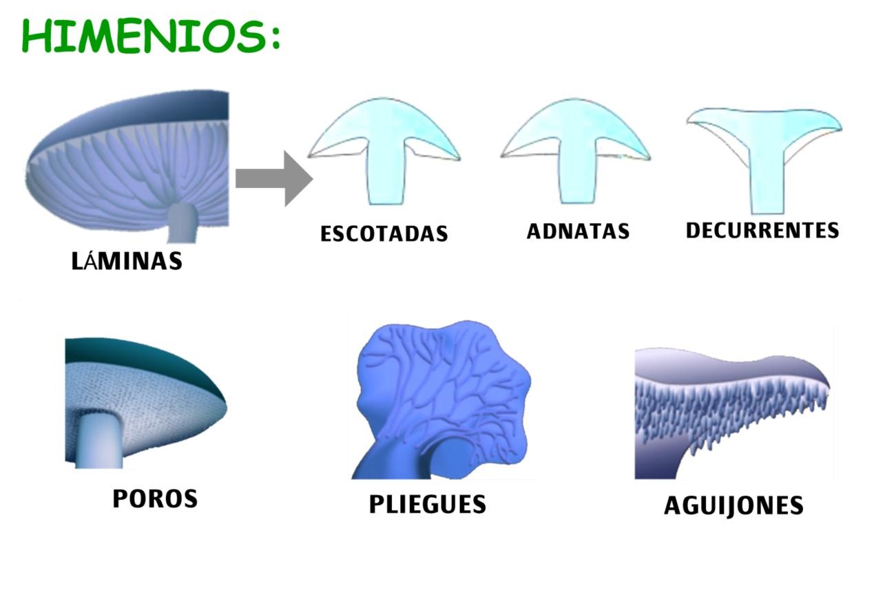 C:\Users\Luis\Pictures\HIMENIOS.jpg