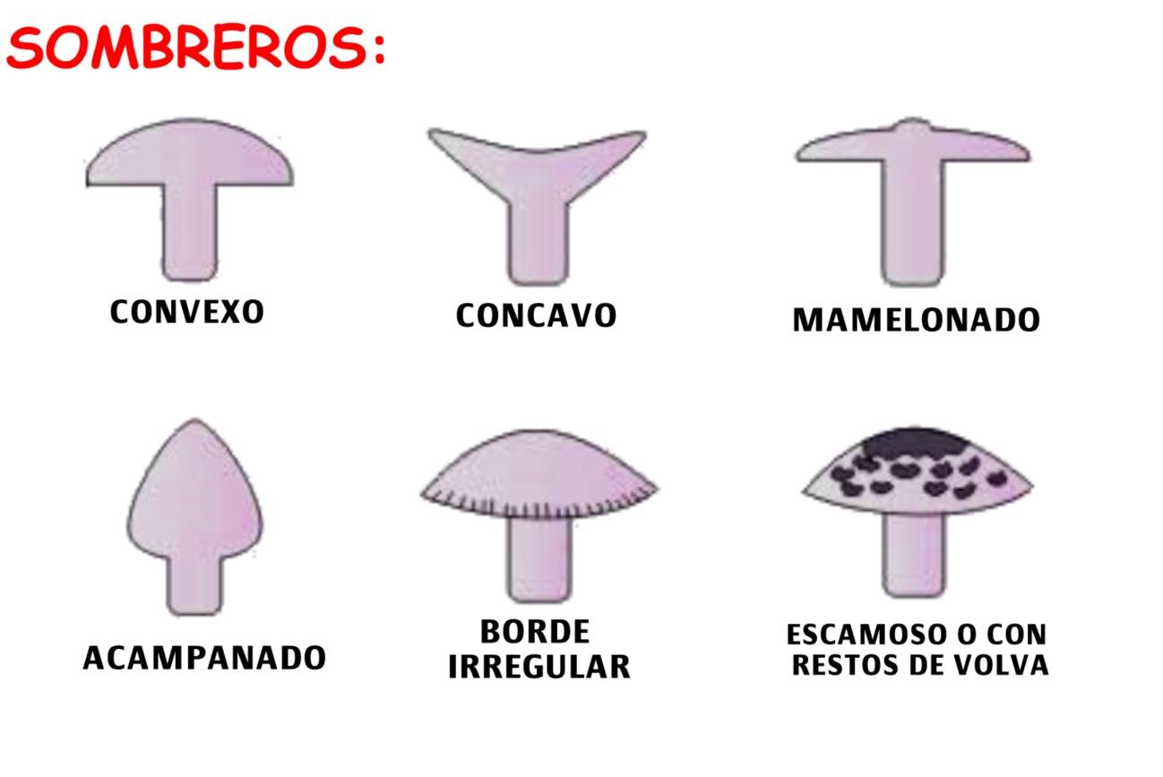 C:\Users\Luis\Pictures\SOMBREROS.jpg