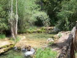 http://www.asmicas.org/imagenes/micologia/habitats/bosques_rivera/ribera.jpg