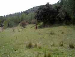 http://www.asmicas.org/imagenes/micologia/habitats/prados/prado.jpg